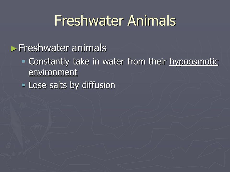 Freshwater Animals Freshwater animals