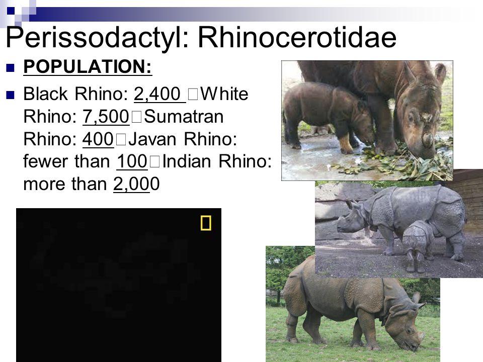Perissodactyl: Rhinocerotidae