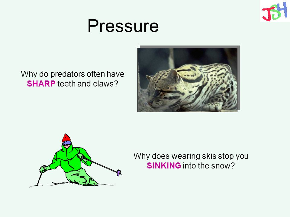 Pressure Why do predators often have SHARP teeth and claws