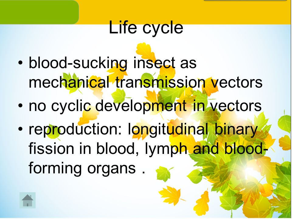 Life cycle blood-sucking insect as mechanical transmission vectors