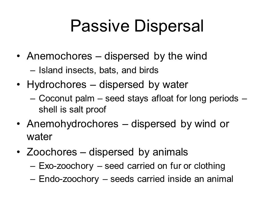 Passive Dispersal Anemochores – dispersed by the wind