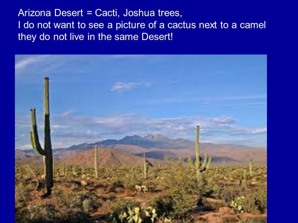 Arizona Desert = Cacti, Joshua trees,