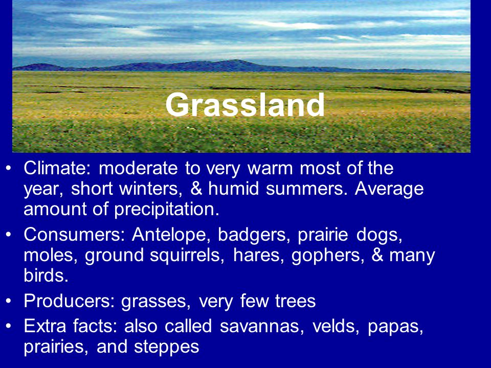 Grassland Climate: moderate to very warm most of the year, short winters, & humid summers. Average amount of precipitation.