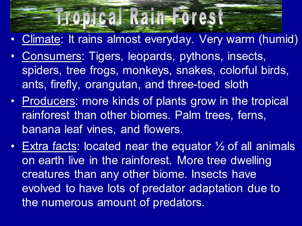 Tropical Rain Forest Tropical Rainforests