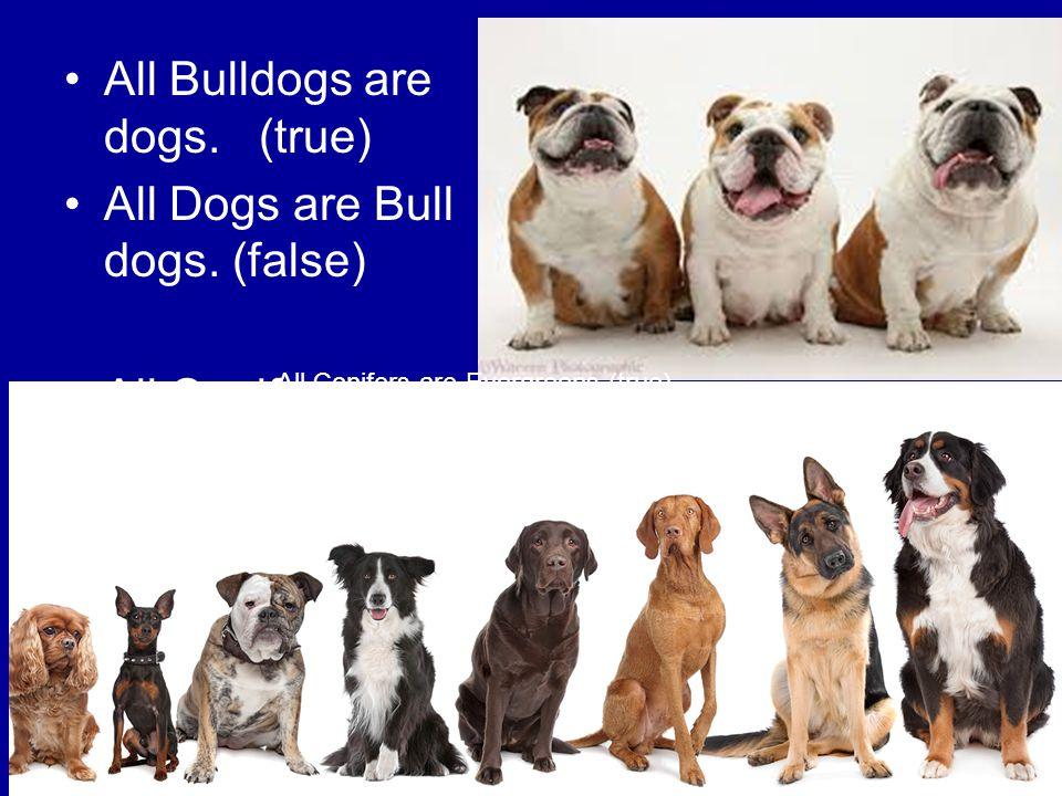 All Bulldogs are dogs. (true) All Dogs are Bull dogs. (false)