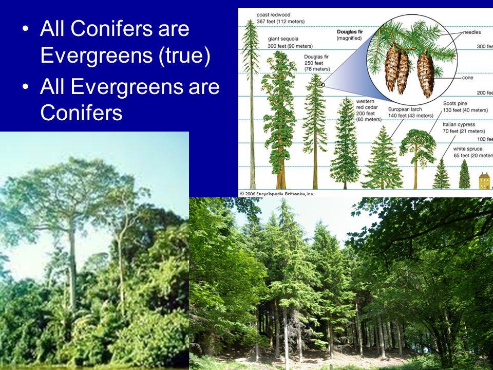 All Conifers are Evergreens (true)