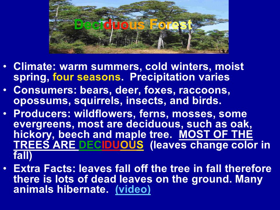 Deciduous Forest Climate: warm summers, cold winters, moist spring, four seasons. Precipitation varies.