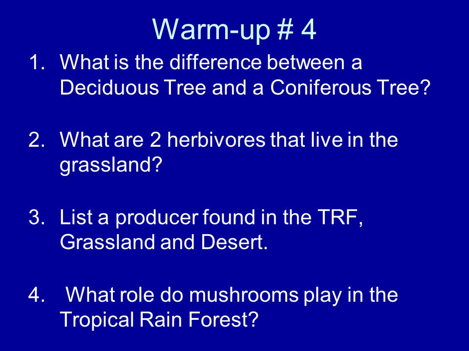 Warm-up # 4 What is the difference between a Deciduous Tree and a Coniferous Tree What are 2 herbivores that live in the grassland