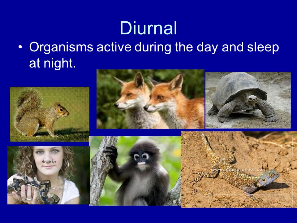 Diurnal Organisms active during the day and sleep at night.