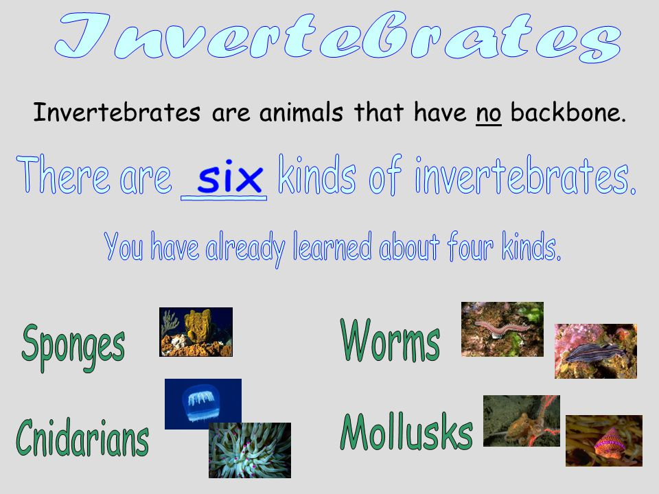There are ____ kinds of invertebrates. six