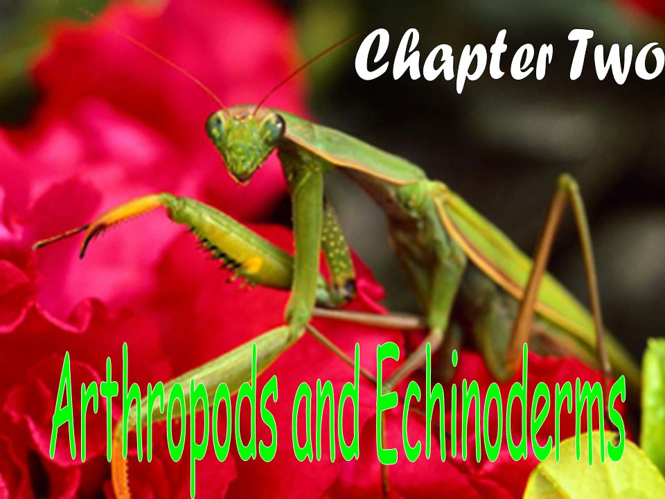 Arthropods and Echinoderms