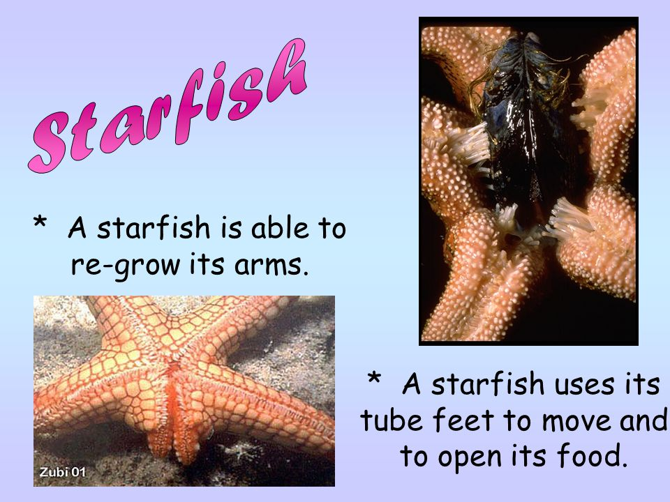 Starfish * A starfish is able to re-grow its arms.