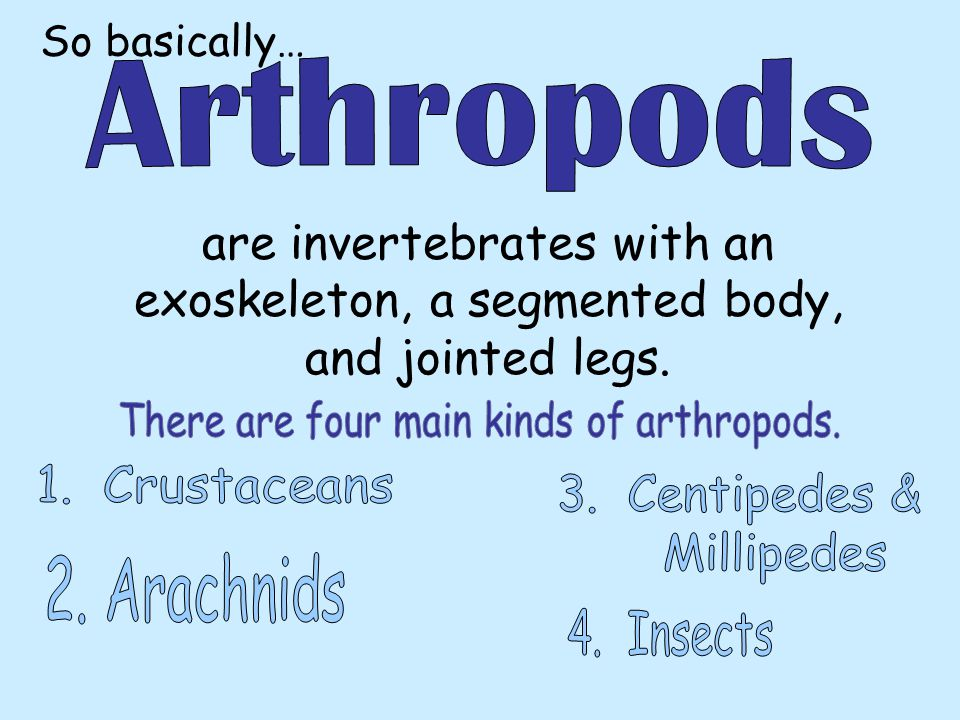 There are four main kinds of arthropods.