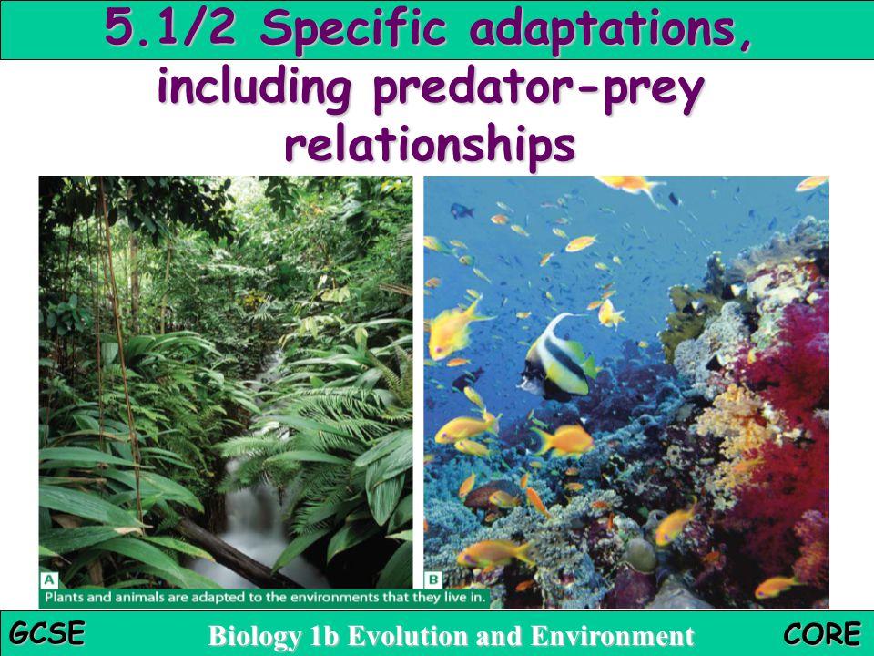 5.1/2 Specific adaptations, including predator-prey relationships