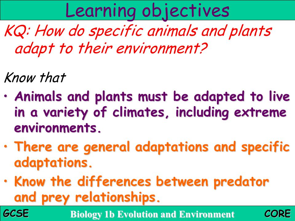 Learning objectives KQ: How do specific animals and plants adapt to their environment Know that.