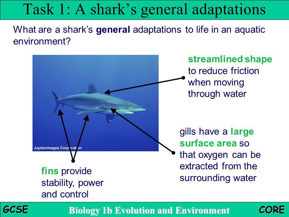 Task 1: A shark's general adaptations