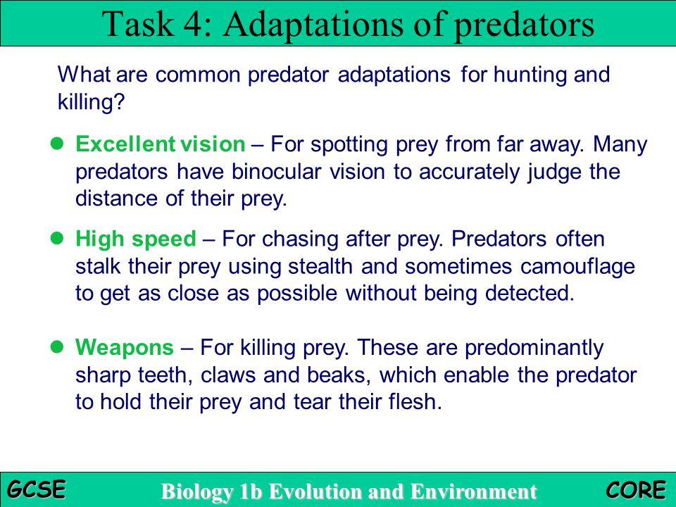 Task 4: Adaptations of predators