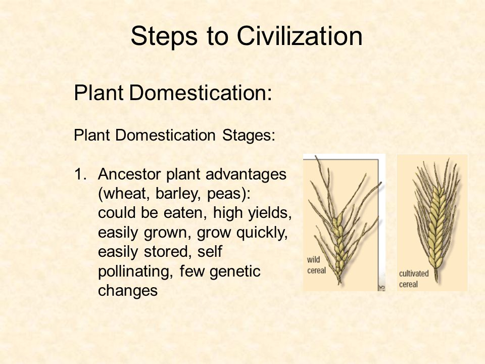 Steps to Civilization Plant Domestication: Plant Domestication Stages: