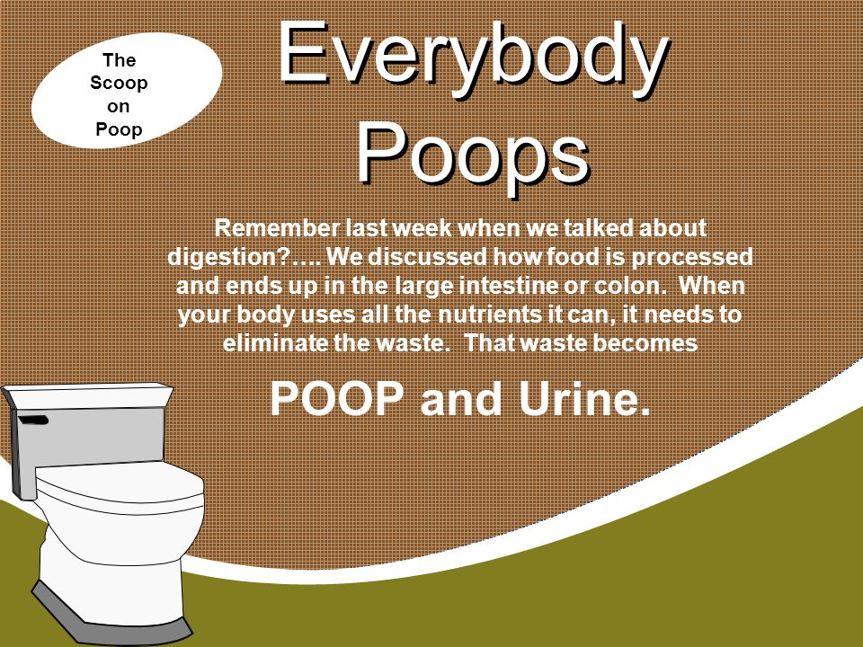 Everybody Poops POOP and Urine.