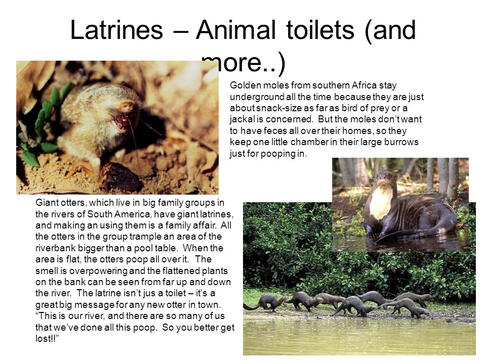 Latrines – Animal toilets (and more..)