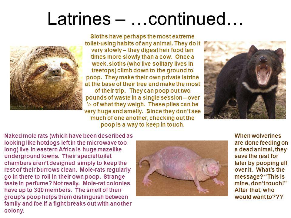 Latrines – …continued…
