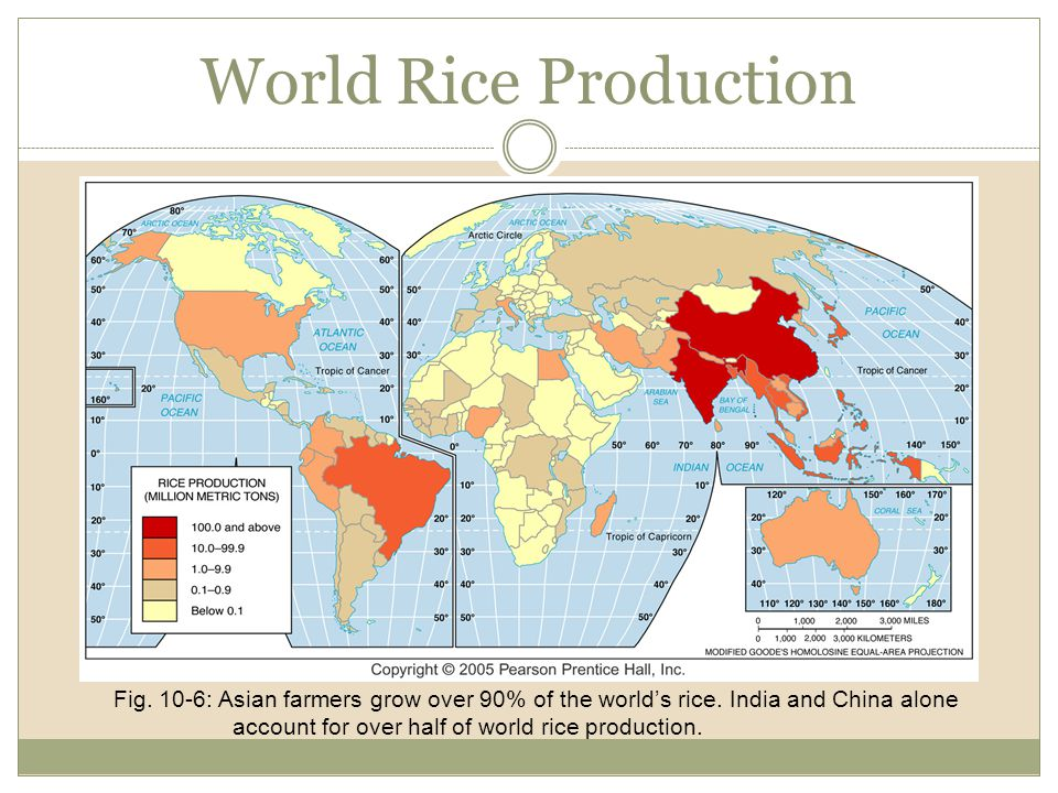 World Rice Production
