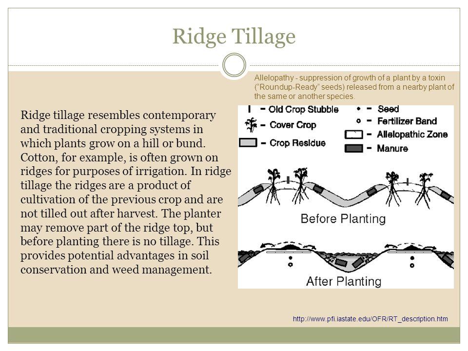 Ridge Tillage