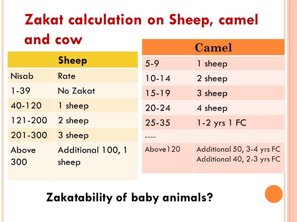 Zakatability of baby animals