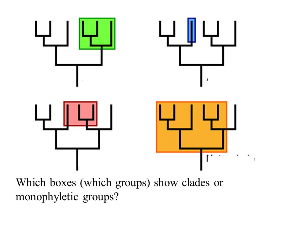 Which boxes (which groups) show clades or monophyletic groups