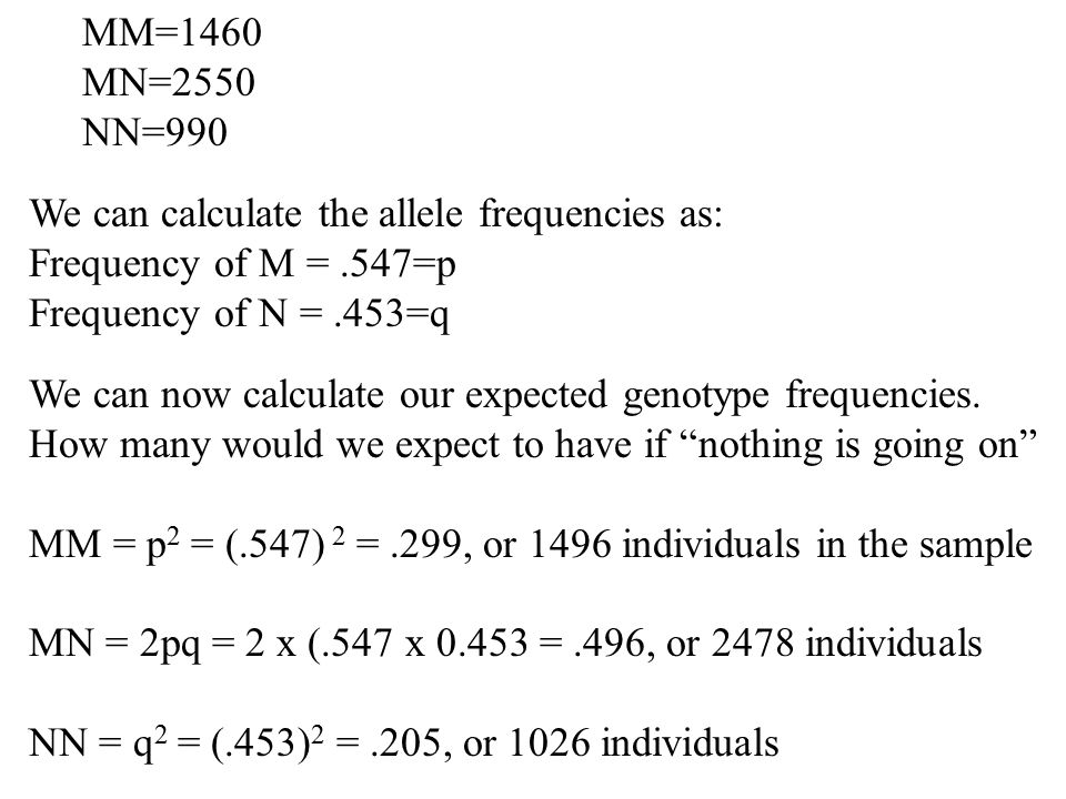 MM=1460 MN=2550. NN=990. We can calculate the allele frequencies as: Frequency of M = .547=p. Frequency of N = .453=q.