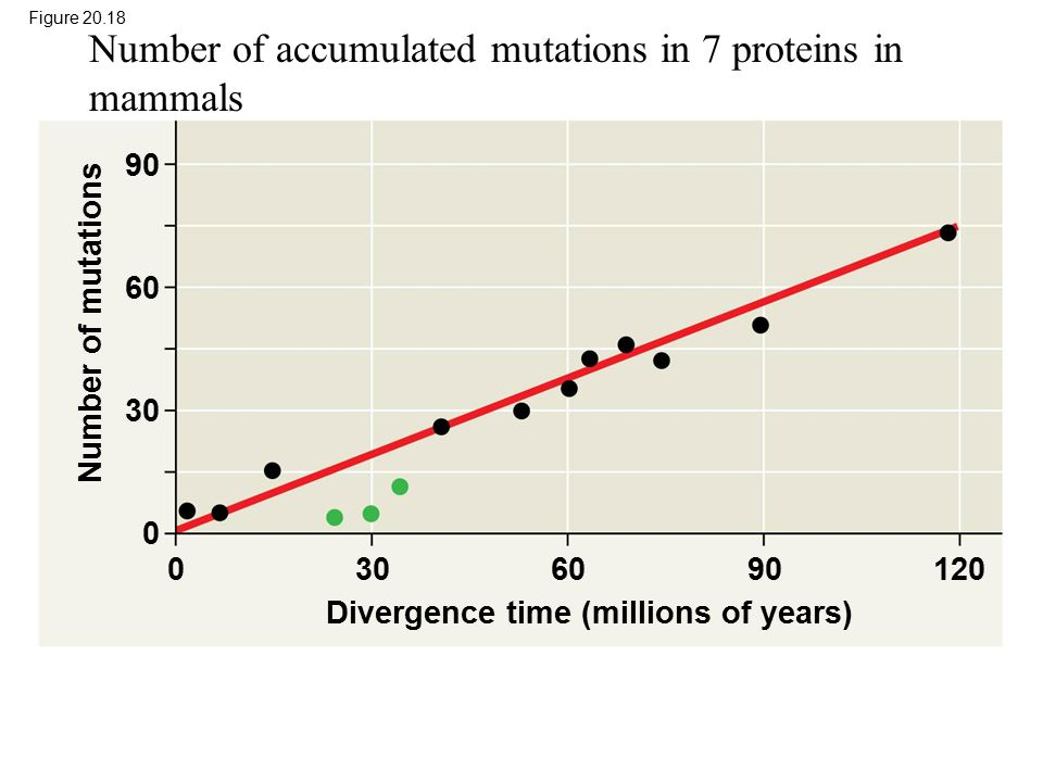 Number of accumulated mutations in 7 proteins in mammals