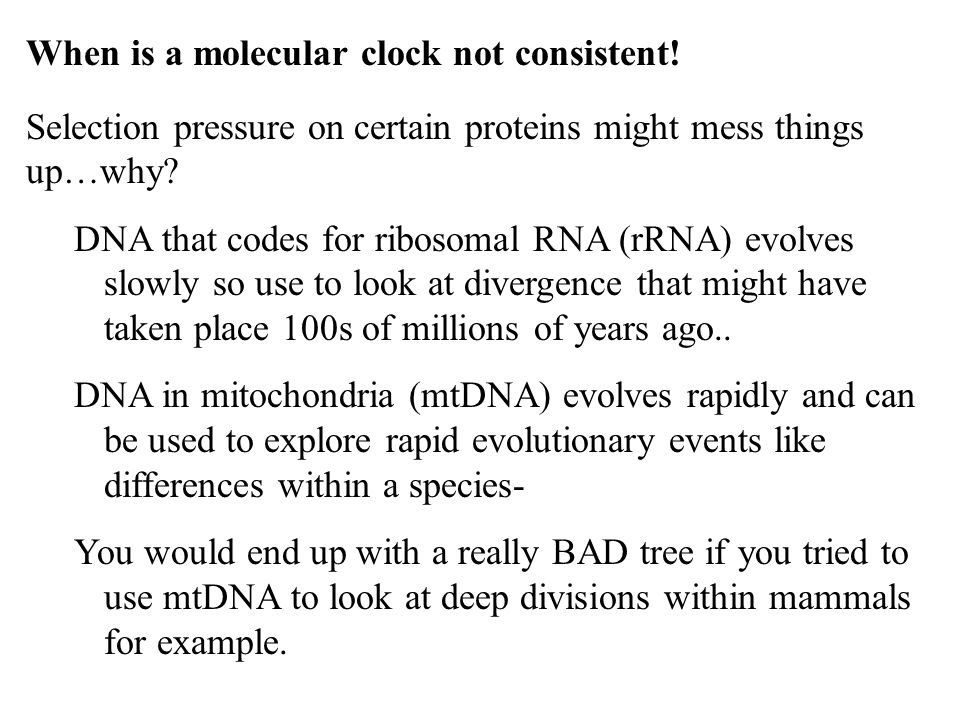 When is a molecular clock not consistent!