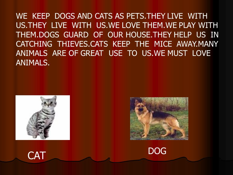 WE KEEP DOGS AND CATS AS PETS. THEY LIVE WITH US. THEY LIVE WITH US