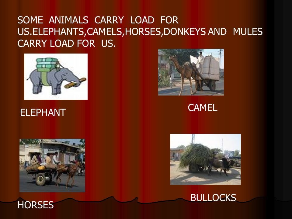 SOME ANIMALS CARRY LOAD FOR US