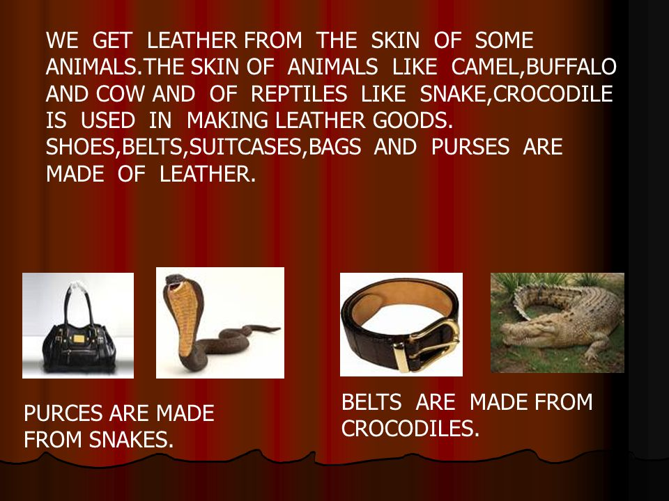 WE GET LEATHER FROM THE SKIN OF SOME ANIMALS