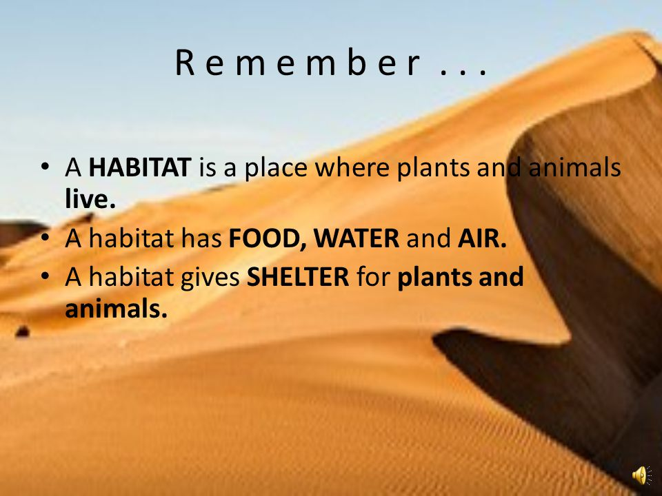 R e m e m b e r . . . A HABITAT is a place where plants and animals live. A habitat has FOOD, WATER and AIR.