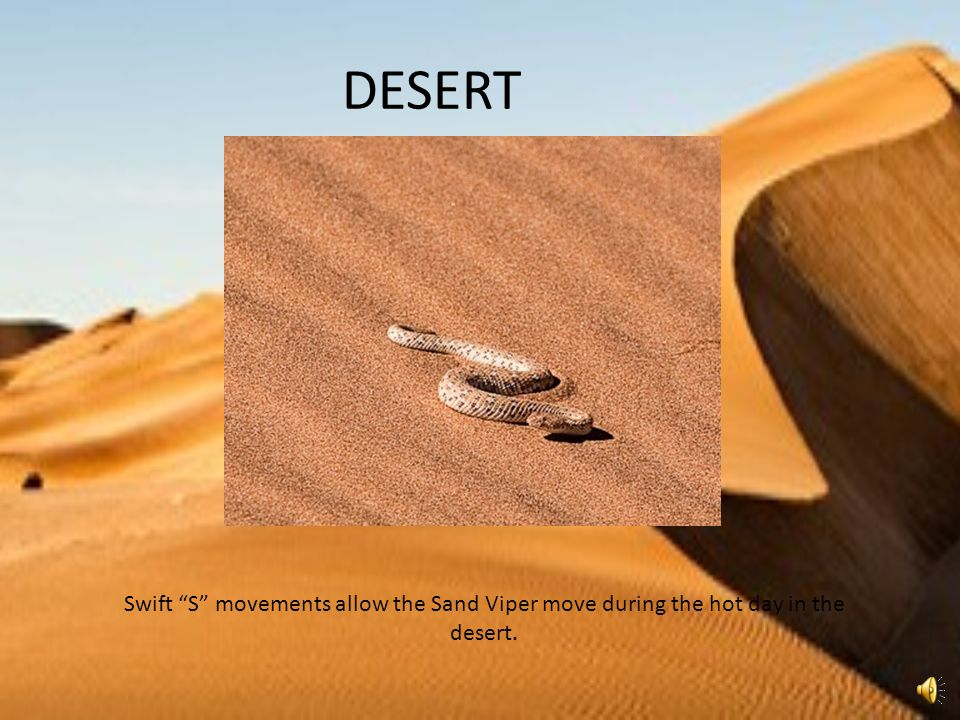 DESERT Swift S movements allow the Sand Viper move during the hot day in the desert.