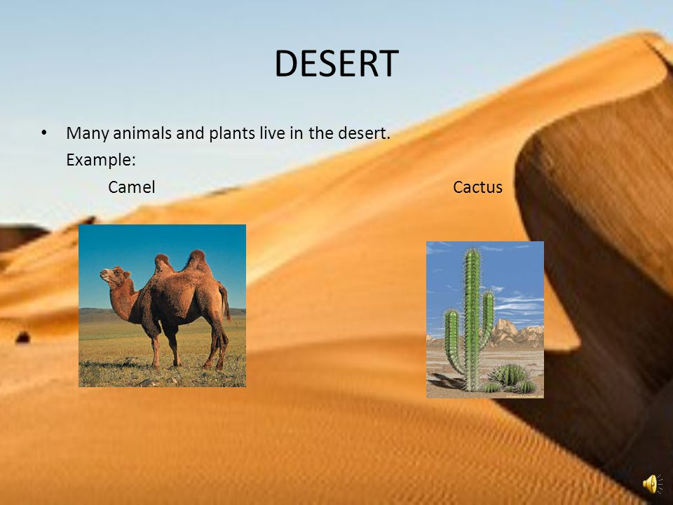 DESERT Many animals and plants live in the desert. Example: