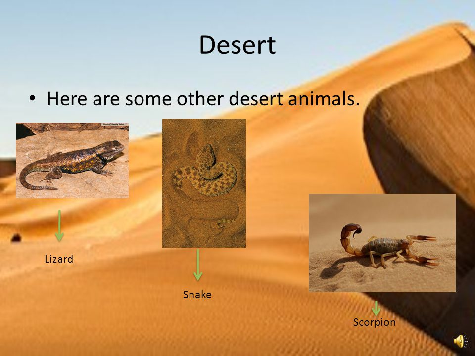 Desert Here are some other desert animals. Lizard Snake Scorpion