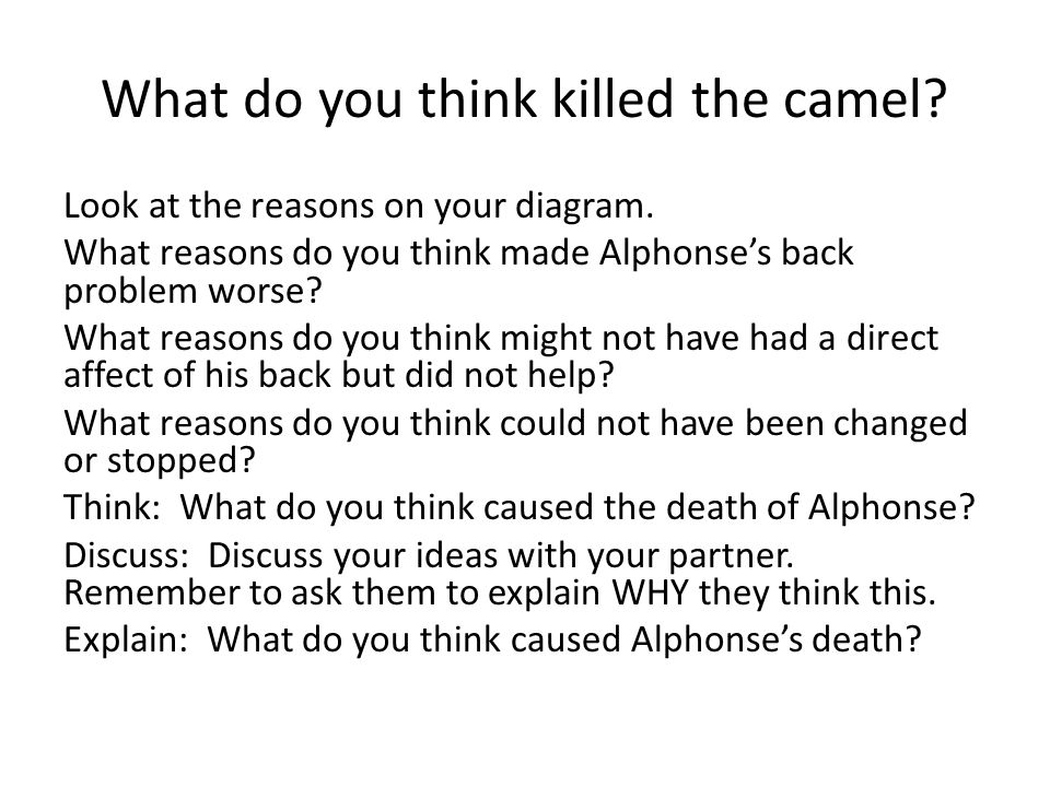 What do you think killed the camel