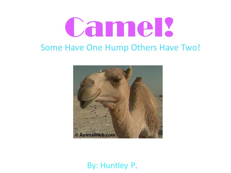 Some Have One Hump Others Have Two!