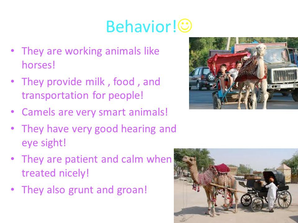 Behavior! They are working animals like horses!