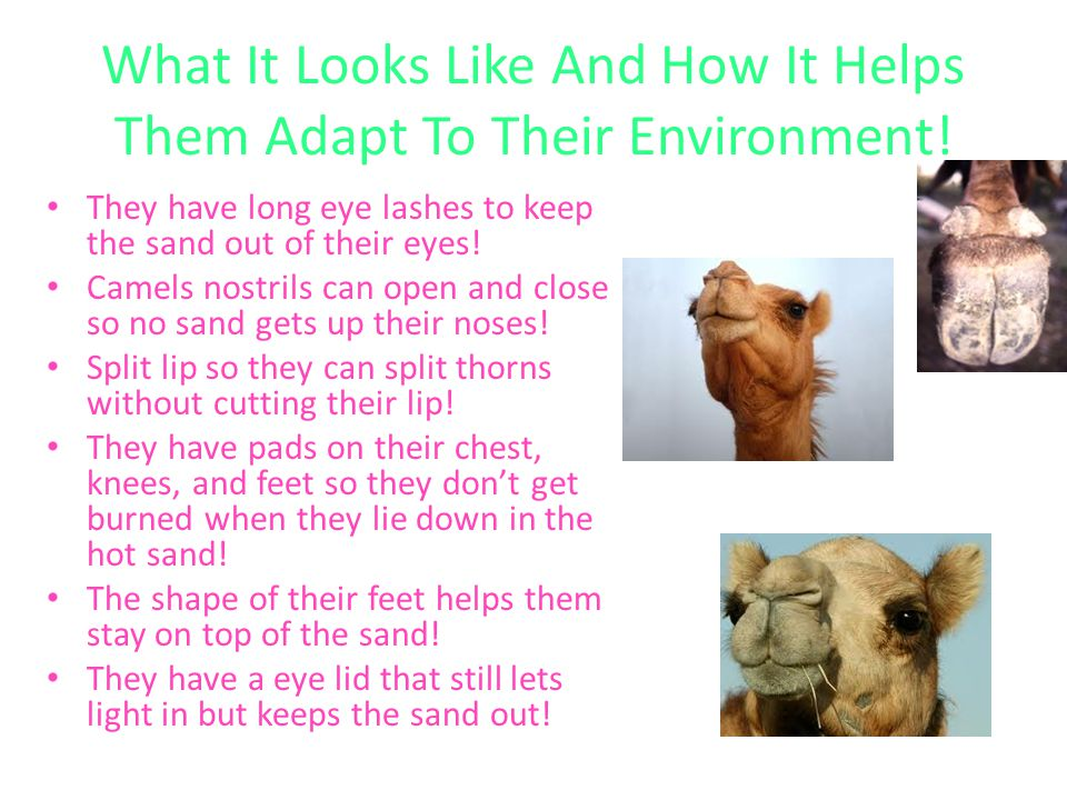 What It Looks Like And How It Helps Them Adapt To Their Environment!