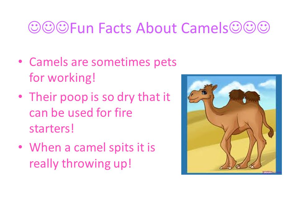 Fun Facts About Camels