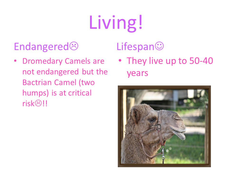 Living! Endangered Lifespan They live up to 50-40 years