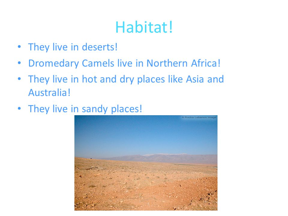 Habitat! They live in deserts!