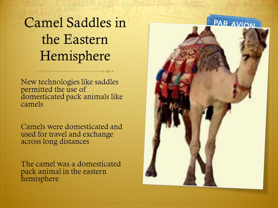 Camel Saddles in the Eastern Hemisphere