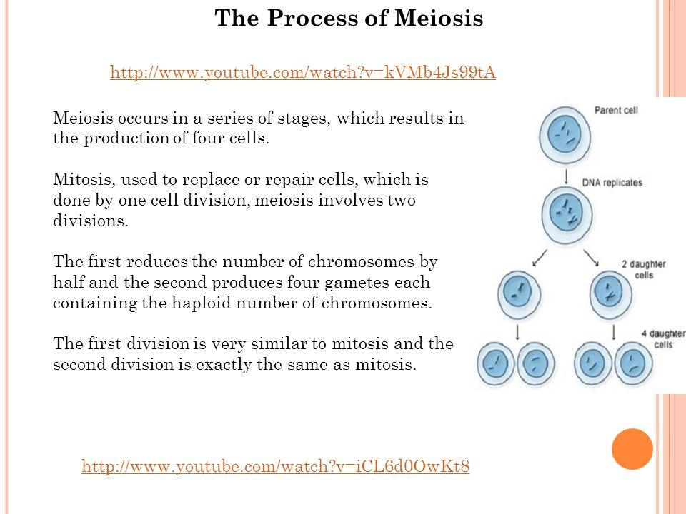 The Process of Meiosis http://www.youtube.com/watch v=kVMb4Js99tA