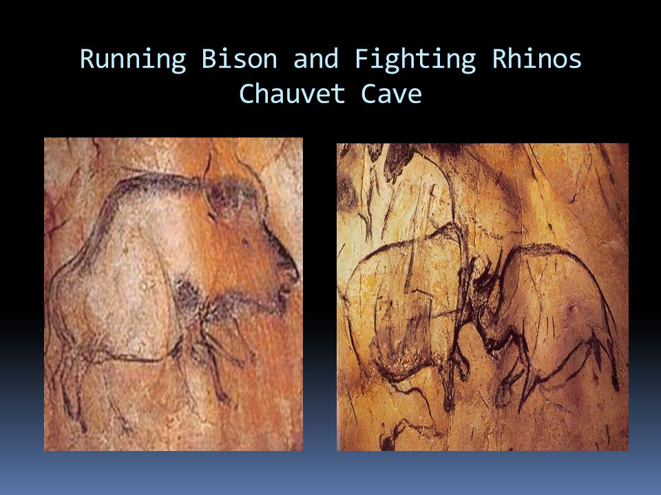 Running Bison and Fighting Rhinos Chauvet Cave