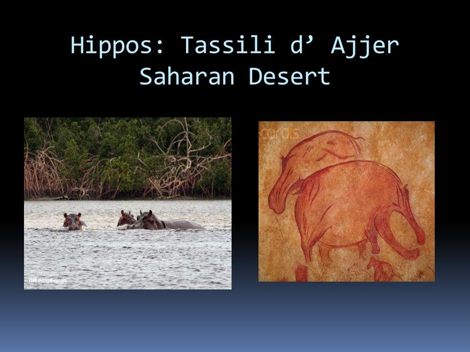 Hippos: Tassili d' Ajjer Saharan Desert